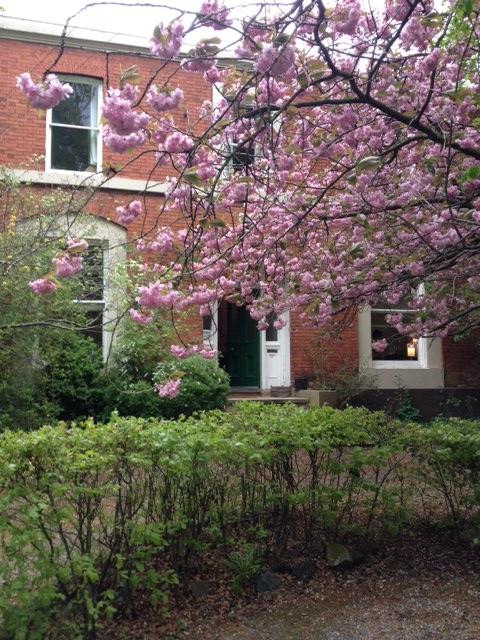 house blossom